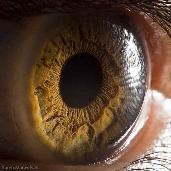 suren_manvelyan olho macro (40)