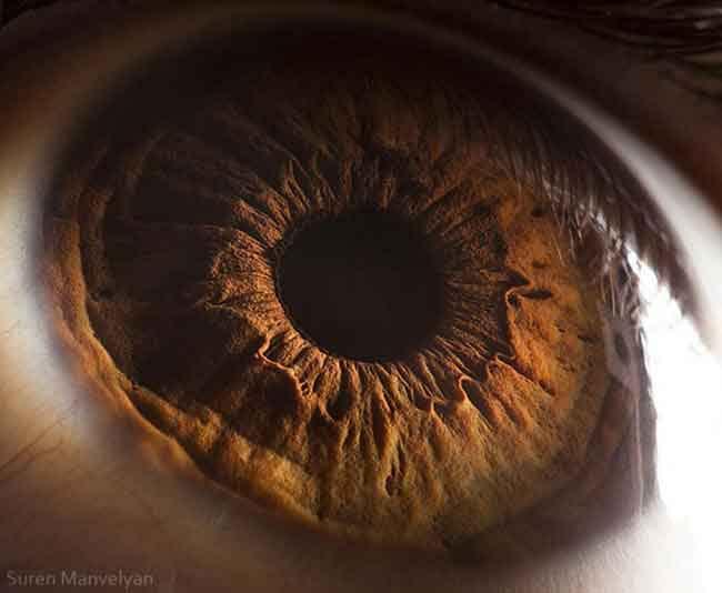 suren_manvelyan olho macro (42)