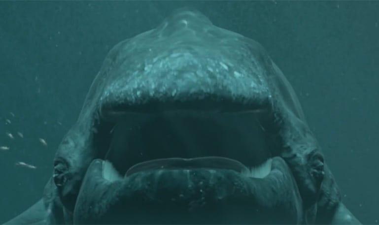 Skol baleia