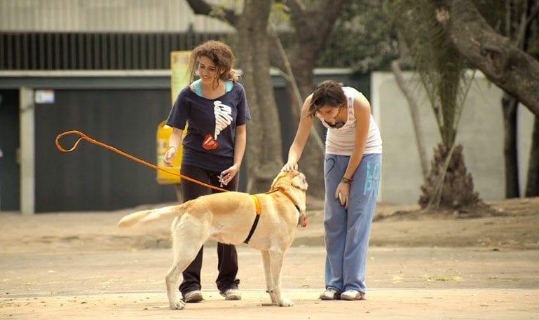 Os cachorros e seus donos invisíveis