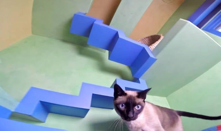 casa-gatos-2