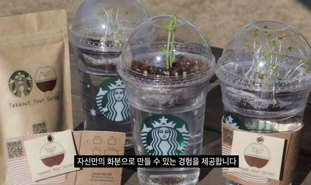 O seu café no Starbucks pode virar uma planta