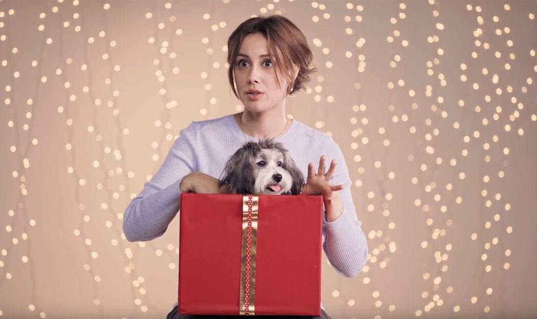Royal Canin alerta: NÃO dê um pet de presente!