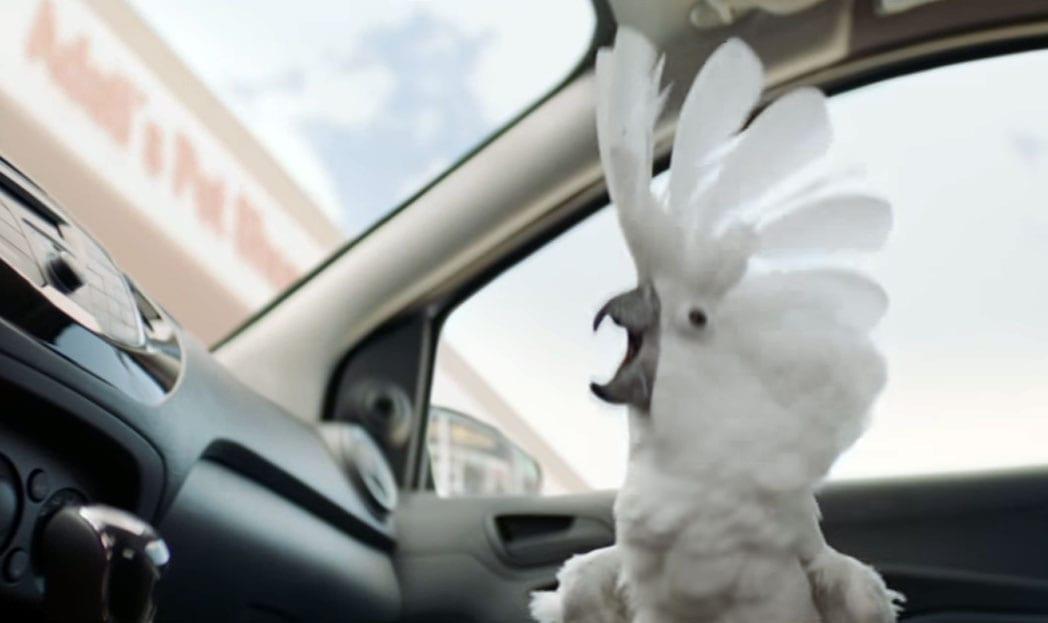 Cacatua roqueira é estrela em comercial da Ford